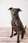 Image 7 of Blue Ridge Humane Society, Hendersonville