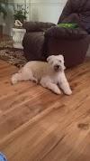 Image 2 of Doggone Pet Salon, Titusville