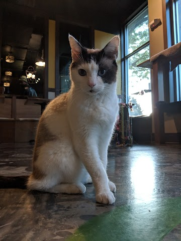 Seattle Meowtropolitan - Seattle's first Cat Cafe image