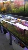 Image 7 of סנפירים-חוות גידול דגי נוי, גני טל