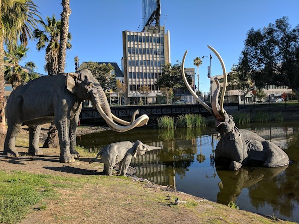 Popular tourist site The La Brea Tar Pits and Museum in Los Angeles