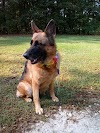Image 2 of My Pet's Best Friend, Piedmont