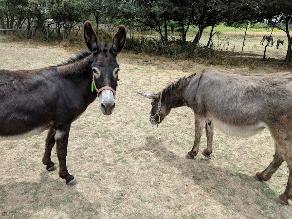Popular tourist site Corfu Donkey Rescue in Corfu