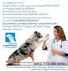 Take me to Clínica del Comportamiento y Salud Animal (Clinica Veterinaria) Heróica Puebla de Zaragoza