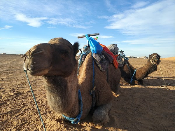 Popular tourist site Fes Desert Tours in Fez