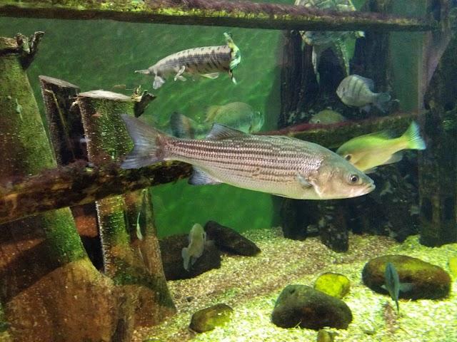 South Carolina Aquarium