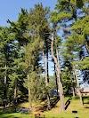 Image 7 of Syosset-Woodbury Community Park, Woodbury