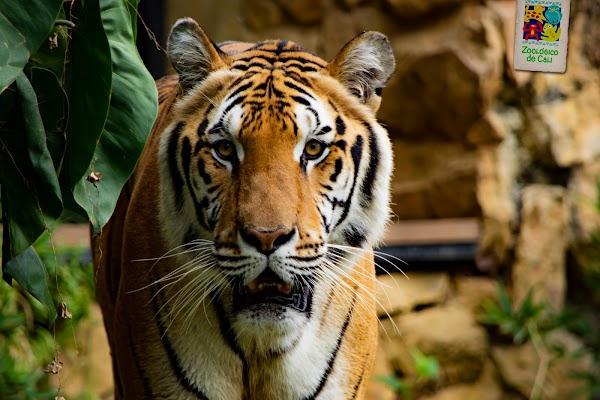 Popular tourist site Zoológico De Cali in Cali