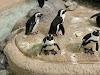 Image 6 of Adventure Aquarium, Camden