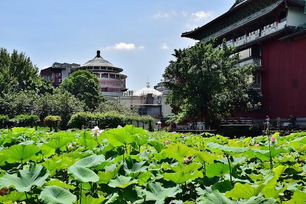 Popular tourist site Taipei Botanical Garden in Taipei