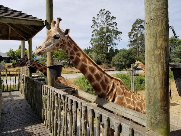 Popular tourist site Orana Wildlife Park in Christchurch