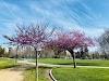 Image 8 of Thamien Park, Santa Clara