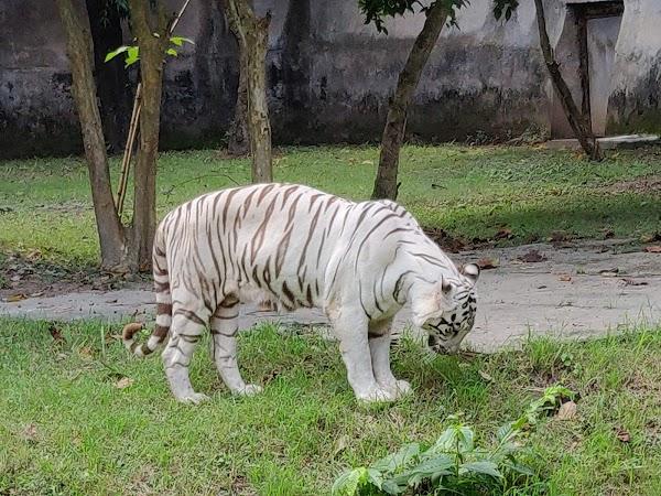 Popular tourist site Alipore Zoo in Kolkata