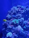 Image 7 of St. Louis Aquarium at Union Station, St. Louis