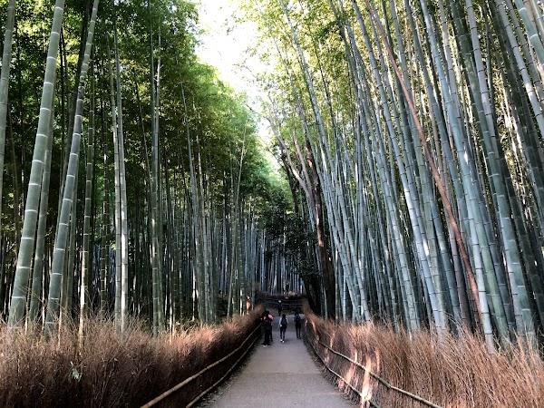 Popular tourist site Arashiyama in Kyoto
