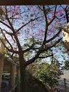 Image 3 of Roth Way Garage, Stanford