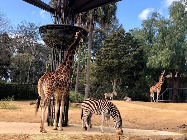 Popular tourist site Melbourne Zoo in Melbourne