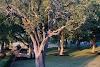 Image 8 of Avery Ranch Golf Club, Austin