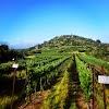 Image 1 of Tzuba Winery, Tzova