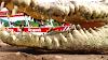 Imagen 1 de Crocodile Man Tour The Original, Jacó