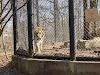 Image 6 of Connecticut's Beardsley Zoo, Bridgeport