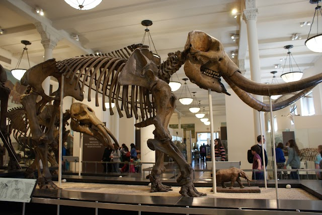 List item American Museum of Natural History image