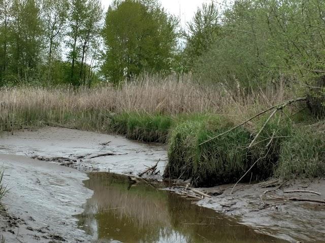 Gog-le-hi-te Wetlands