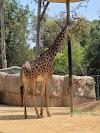Image 3 of San Diego Zoo, San Diego