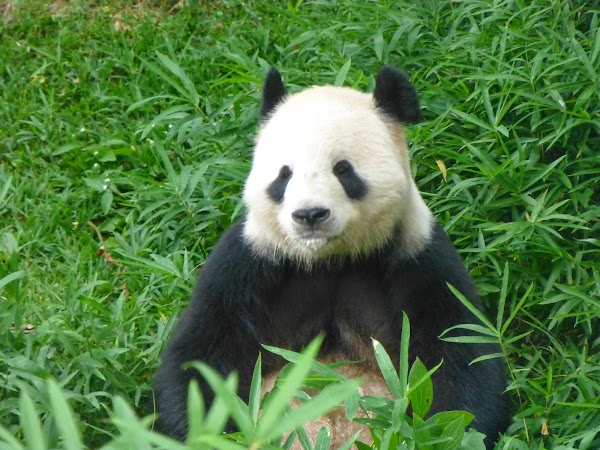 Popular tourist site Smithsonian National Zoological Park in Washington D.C.