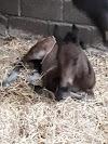 Image 2 of Centre Equestre de la Ferme Rosier, Wavre