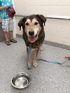 Image 3 of Blue Ridge Humane Society, Hendersonville