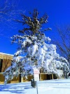 Image 8 of Minnesota State University, Mankato, Mankato