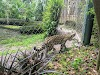Image 8 of Jacksonville Zoo & Gardens, Jacksonville