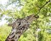 Image 5 of Nashville Zoo at Grassmere, Nashville