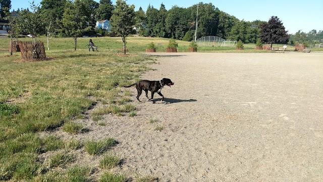Genesee Dog Park
