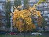 Image 4 of Sobornosti Ave, Kyiv