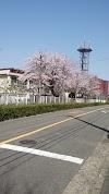 Image 2 of 藤沢市立滝の沢中学校, 藤沢市