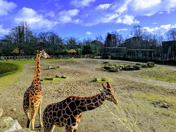 Popular tourist site Dublin Zoo in Dublin