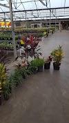 Image 5 of Houston Garden Centers - West Loop North, Houston