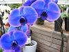 Image 3 of Vermeer's Garden Centre & Flower Shop, Welland