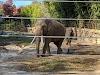 Image 8 of National Zoological Park, Washington