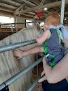 Image 7 of Washington County Fairgrounds, Hillsboro