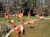 Image 7 of Nashville Zoo at Grassmere, Nashville