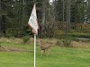 Image 3 of McCormick Woods Golf Club, Port Orchard