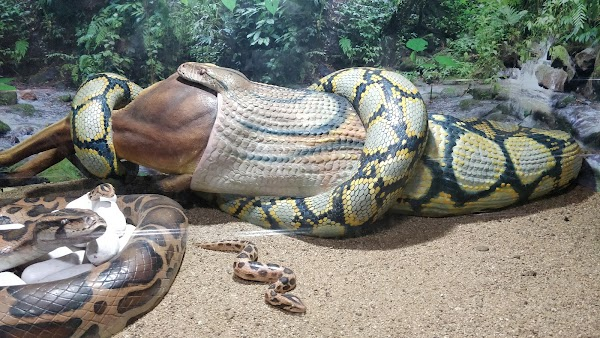 Popular tourist site Chennai Snake Park Trust in Chennai