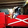 Image 6 of חוות סוסים צעד בשניים, אחיהוד