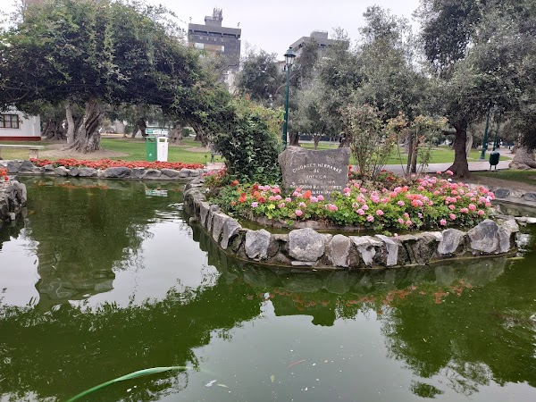 Popular tourist site Forest El Olivar in Lima