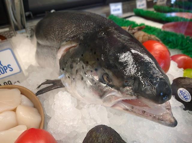 Encinitas Fish Shop image