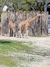 Image 7 of St. Louis Zoo, St. Louis