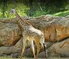 Image 8 of Nashville Zoo at Grassmere, Nashville